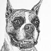 Boxer Dog Sketch Poster