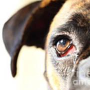Boxer's Eye Poster