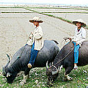 Boys On Water Buffalo In Countryside-vietnam Poster