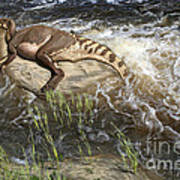 Brachylophosaurus canadensis corpse Poster