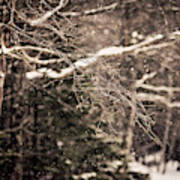 Branch In Forest In Winter Poster