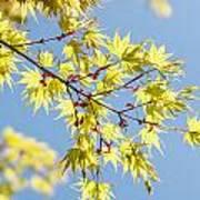 Branche In Springtime Poster