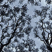 Branches Across Poster