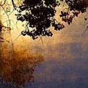 Branches Misty Pond Sunrise Poster