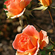 Brass Band Roses In Autumn Poster
