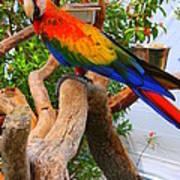 Brazilian Parrot Poster