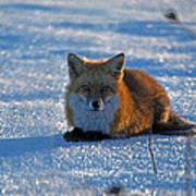 Brer Fox Poster