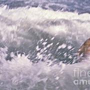 Brian Swimming In The Sea Poster