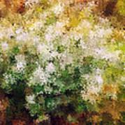 Bridal's Wreath Poster by Brenda Bryant