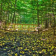 Bridge In Gosnell Big Woods Poster