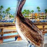 Brief Pelican Encounter  Poster
