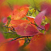 Bright Autumn Leaves Poster