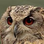 Bright Eyed Eagle Owl  Poster