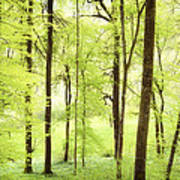 Bright Green Forest In Spring With Beautiful Soft Light  Poster
