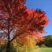 Bright Orange Of Fall Poster