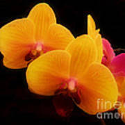 Bright Orchids Poster