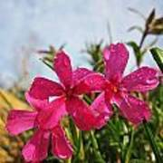 Bright Phlox Blooms Poster