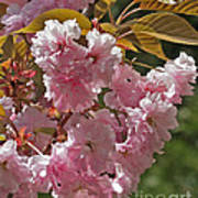 Bright Pink Apple Tree Flowers Poster