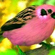 Bright Pink Finch Poster