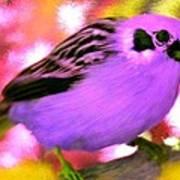 Bright Purple Finch Poster