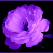 Bright Purple Perfection Poster