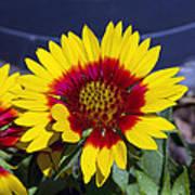 Bright Summer Flower  Poster