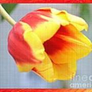 Bright Tulip Poster