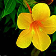 Bright Yellow Flower Poster