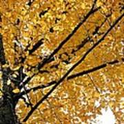 Bright Yellow Leaves Poster
