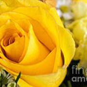 Bright Yellow Rose Poster