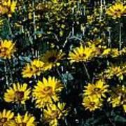 Brillant Flowers Full Of Sunshine. Poster