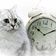 British Longhair Cat Time Goes By II Poster