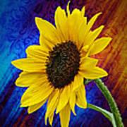 Brocade Daisy Poster
