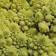 Broccoli Heirloom Poster