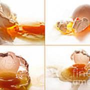 Broken Chicken Eggs Poster