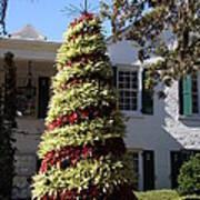 Bromelia Christmas Tree Poster