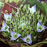 Bromeliad In Bloom Poster by Urszula Dudek