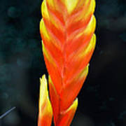 Bromeliad Red And Yellow Poster