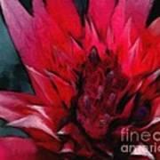 Bromeliad Splendor Poster