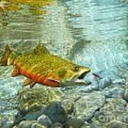 Brook Trout And Silver Doctor Poster