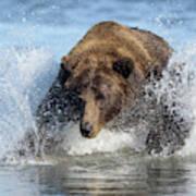 Brown Bear, Ursus Arctos, Fishing Poster