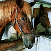 Brown Horse In Stall Poster