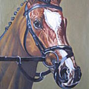 Brown Horse Poster