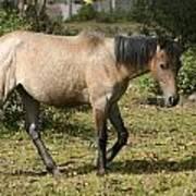 Brown Horse Walking Through A Pasture Poster