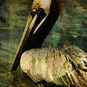 Brown Pelican Beauty Poster