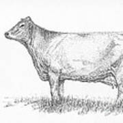Brown Swiss Dairy Cow Poster by J E Vincent