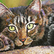 Brown Tabby Relaxing Poster