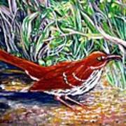 Brown Thrasher In Sunlight Poster