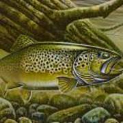 Brown Trout Log Poster by Jon Q Wright