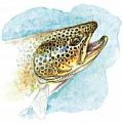 Brown Trout Study Poster